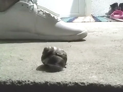 Snail crushed under sneakers